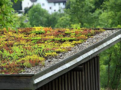 Gründach, Zaspel-Dach - Flachdachabdichtungen